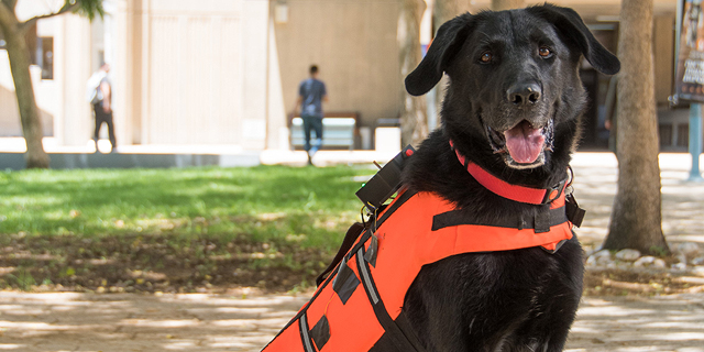 This Dog Vest Sends Good Vibes to Search and Rescue Pups