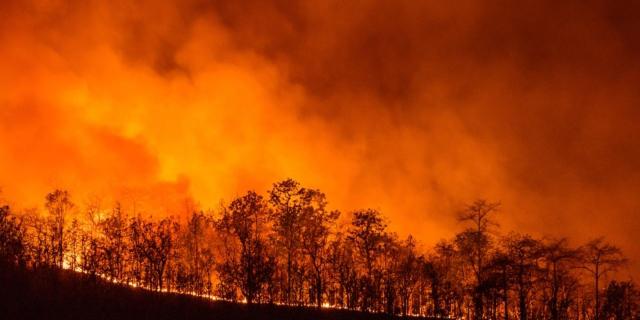בזמן שקליפורניה נאבקת בשריפות ההרסניות, בבית הלבן עושים הכל כדי להקשות עליה