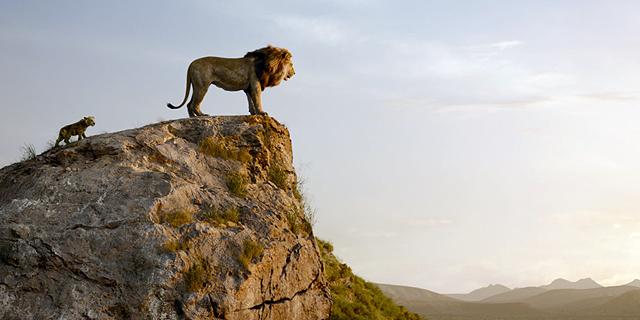 """סימבה, תתבגר: הזגזוג של """"מלך האריות"""" החדש"""