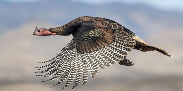 תעופו על זה: תמונות מתחרות צילומי ציפורים
