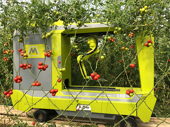 MetoMotion's tomato-picking robot. Photo: MetoMotion