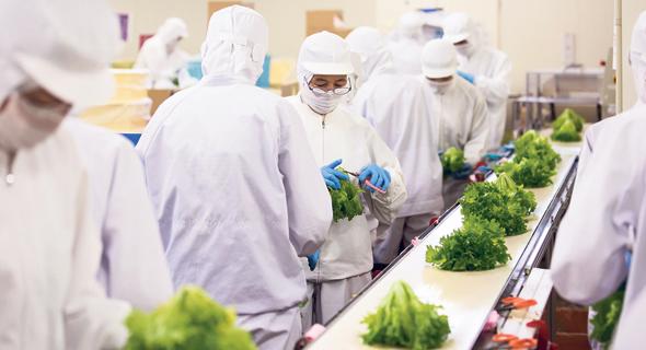 """עובדים במפעל לגידול אוטומטי של חסה ביפן. אחד האתגרים הוא """"להצליח להביא לצרכן מוצרים כמה שיותר טבעיים וטריים"""""""