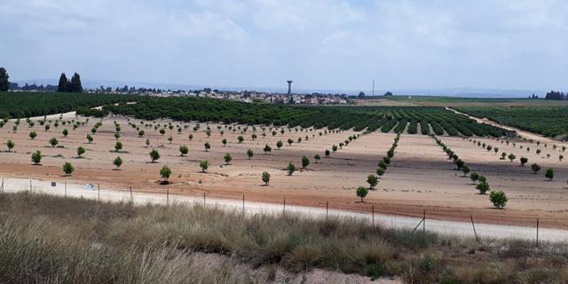 """שדה קרקע חקלאית זירת הנדל""""ן  , צילום: אריק דורי"""