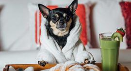 כלב כלבים מבקר מלון Hotels.com , צילום: Hotels.com