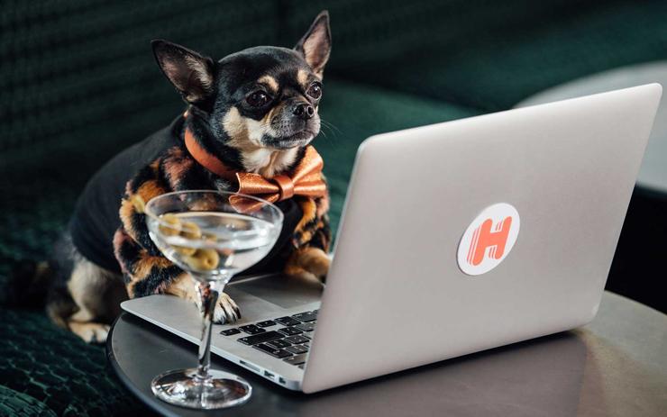 גם כלבים זקוקים לחופשה, צילום: Hotels.com