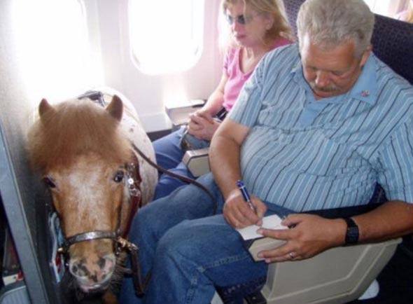 סוס פוני בטיסה