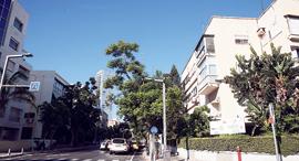 """רחוב בלוך בת""""א, צילום: אוראל כהן"""