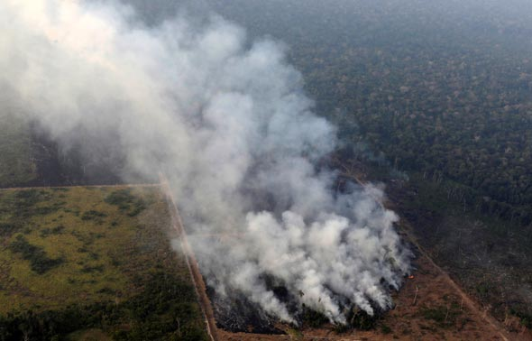 שריפות באמזונס