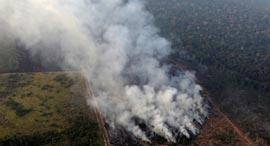 שריפה באמזונס, צילום: רויטרס