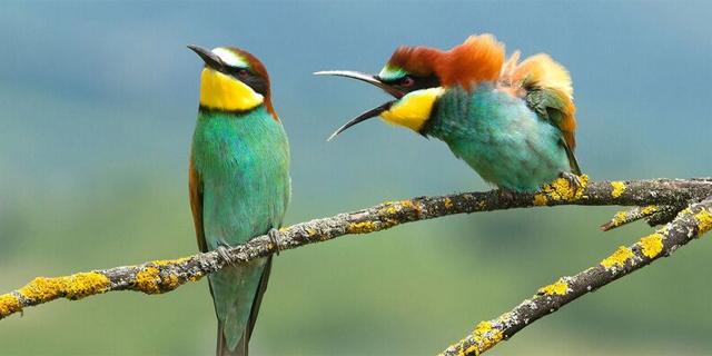 חיות וחיוכים: הפיינליסטים של תחרות באתר של צילומי חיות מצחיקים