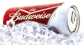 בירה באדווייזר, צילום: שאטרסטוק