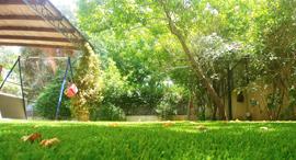 דשא טבעי או סינטטי?