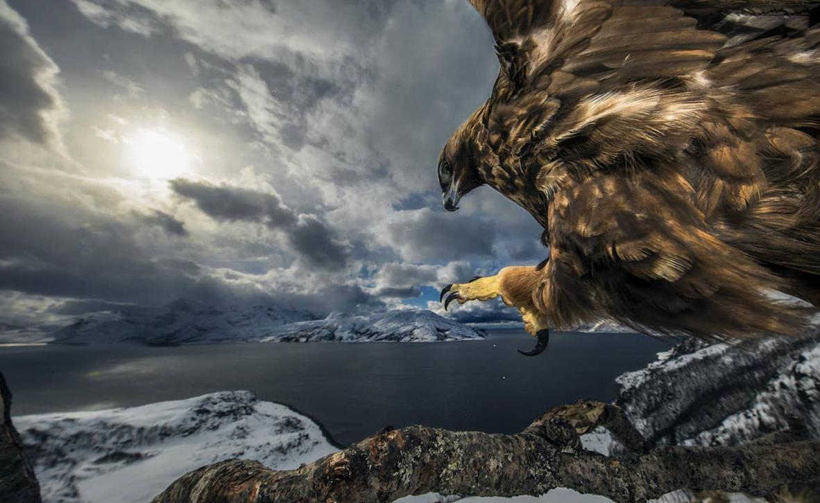 צילום: Audun Rikardsen / WILDLIFE PHOTOGRAPHER OF THE YEAR 2019 WINNERS