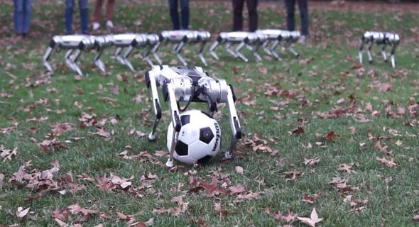 הרובוטים של MIT משחקים כדורגל, צילום: MIT