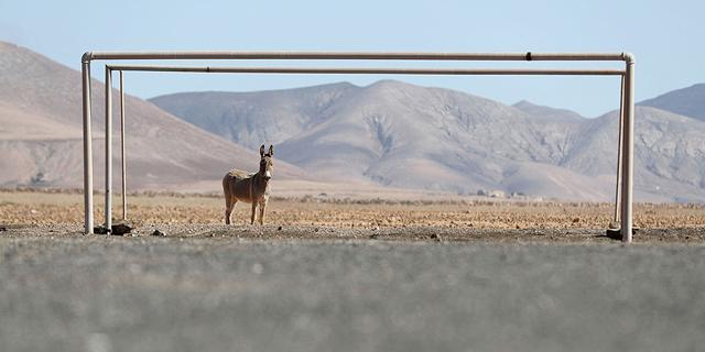 שחקנים זרים: כשבעלי חיים מגיעים למגרשי הספורט