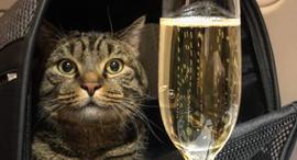 חתול ויקטור אירופלוט טיסה, צילום: Facebook/ Mikhail Galin