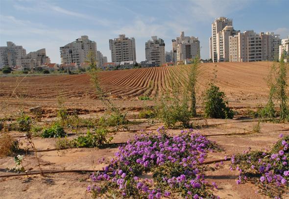 """קרקע חקלאית. """"עבור מרבית הישראלים התחום עדיין מתחת לרדאר"""""""
