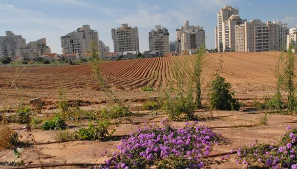 קרקעות חקלאיות בין פתח תקוה לגבעת שמואל , צילום: אודי שטייוול פיקיוויקי