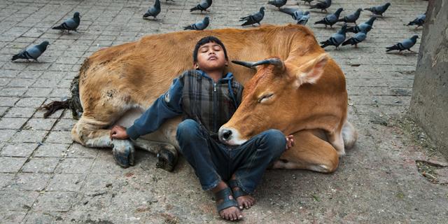 על הקשר המורכב בין חיות ובני אדם: צילומים של סטיב מקורי