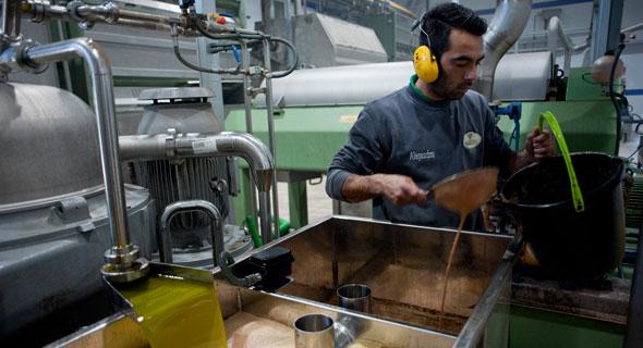 מפעל שמן זית באנדלוסיה, ספרד, צילום: איי. אף. פי
