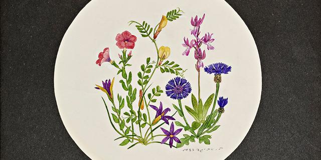 אל תקטוף, נערי: הפריחה הנצחית של ברכה אביגד-לוי
