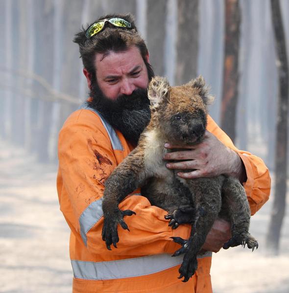 הצלת קואלה במהלך שריפות הענק באוסטרליה, לפני כחצי שנה