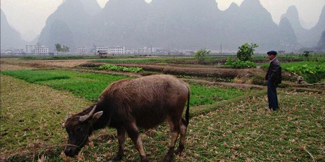 עליבאבא תסייע לממשל לחלץ את החקלאים מעוני
