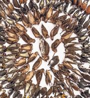ציפורים מתות , צילום: FLAP Canada