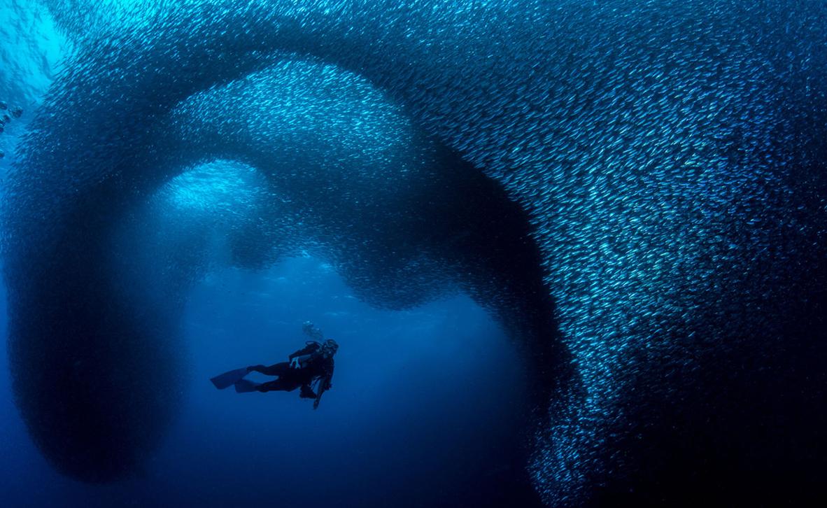 צילום:George Kuo-Wei Kao / Ocean Art