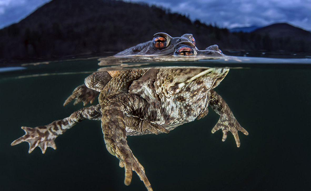 צילום: Claudio Zori / Ocean Art