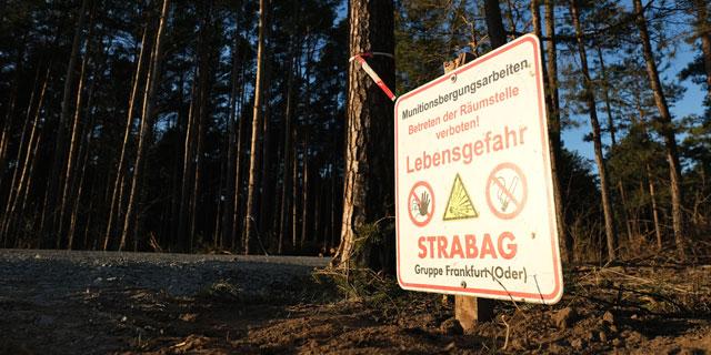 בית משפט בגרמניה: טסלה תוכל לכרות יער כדי להקים מפעל חדש