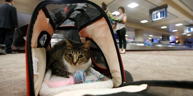"""סוף עידן: ארה""""ב בדרך להגביל העלאת חיות מחמד לטיסות"""
