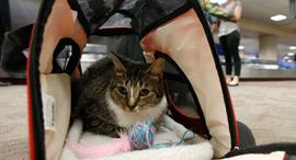 חתול מטוס טיסה תמיכה נפשית , צילום: איי פי
