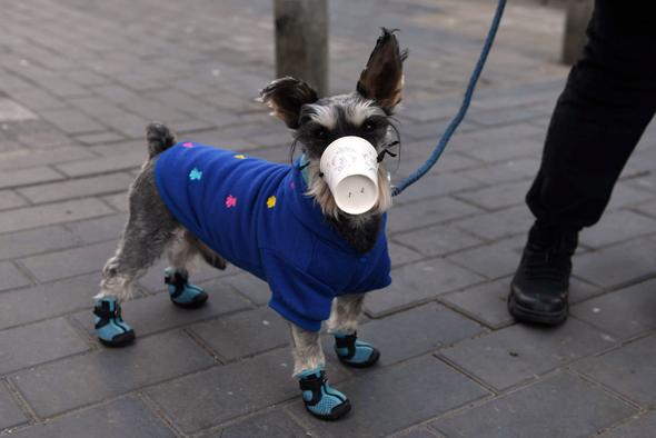 כלב ממוגן בבייג'ינג. חברות תעופה וקרוזים בכוננות־על