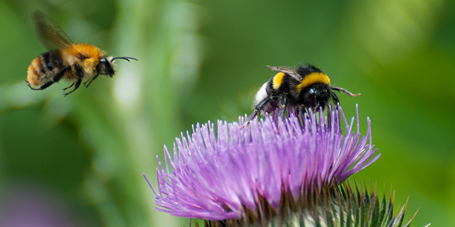 How Covid-19 Can Save the World's Bee Population