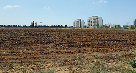 קרקע חקלאית חדרה זירת הנדלן, צילום: אריק דורי
