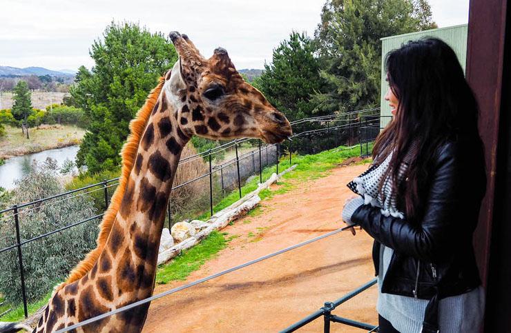 , צילום: Jamala Wildlife Lodge