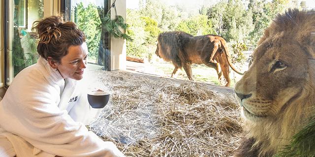 לישון עם אריות: גן חיות באוסטרליה מפעיל מלון יוקרה בין הכלובים