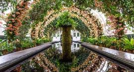סחלבים בגן הבוטני בניו יורק, צילום: courtesy New York Botanical Garden