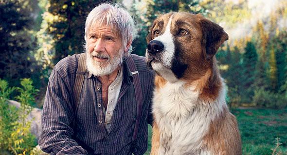 פורד והכלב באק. הסרט לא מנסה להעלים את החייתיות מהחיות, צילום: Courtesy of Twentieth Century Fox