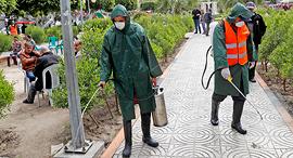 חיטוי נגד קורונה בעזה, צילום: איי פי