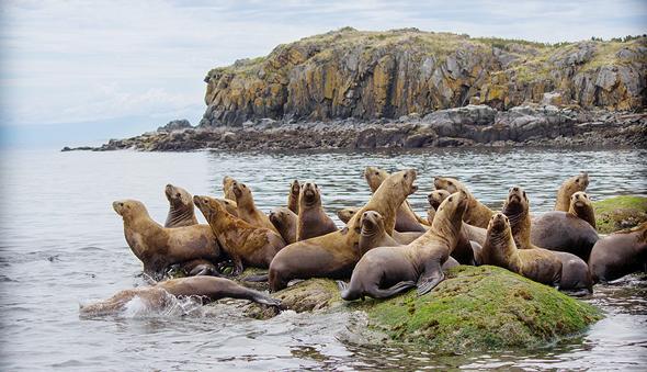 כבלי ים באלסקה