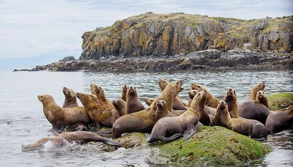 כלבי ים באלסקה , צילוםף שאטרסטוק