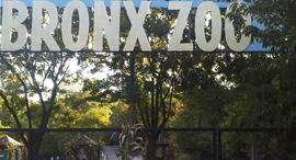 גן חיות ברונקס ניו יורק, צילום: איי פי
