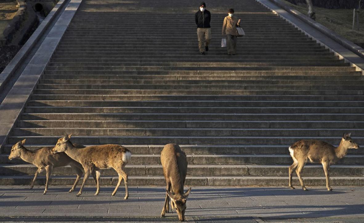 חיו בר בעיר, ביפן, צילום: איי אף פי