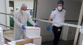 פרופ׳ רוברט פלור מנהל המרכז הישראלי הלאומי לרפואה  בדיקות קורונה, צילום: מכון ויצמן למדע