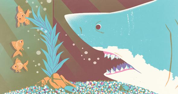 איור כריש הייטק