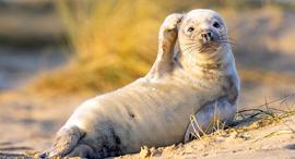 פוטו תחרות צילומים מצחיקים של חיות כלב ים , צילום: Johan Siggesson
