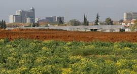 קרקע חקלאית זירת הנדלן, צילום: אוראל כהן