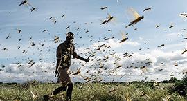 פוטו ארבה מדינת מבורה קניה, צילום: גטי אימג'ס